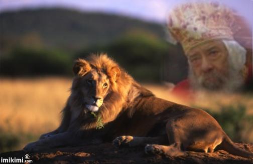 صور قداسة البابا شنودة ( الأسد المرقسى) من تصميمى
