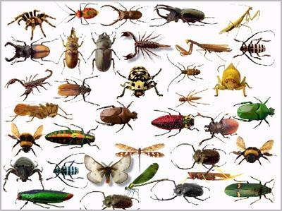 جمع الحشرات وتحميلها وحفظها 705732073